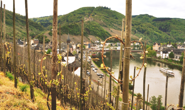 The Moselle hillsides are perfect for mountain biking with amazing views and healthy exercise